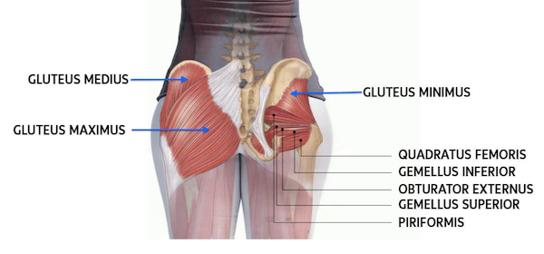 The Glutes